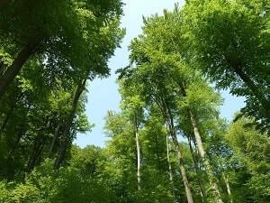 Лиственные деревья.